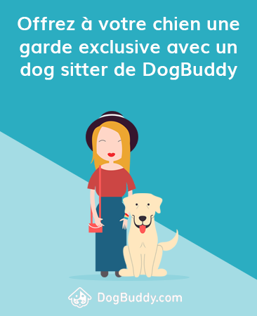 treat your dog to 1-1 care with a DogBuddy sitter